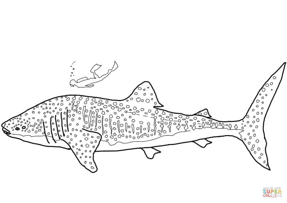 Coloring Pages of Whale Sharks in 2020 | Shark coloring ...