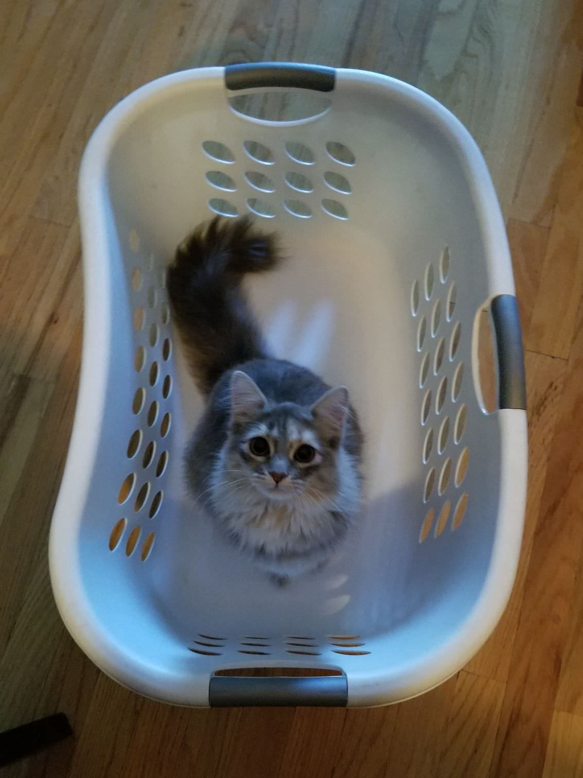 bug likes to get carried around in the laundry basket http ift tt
