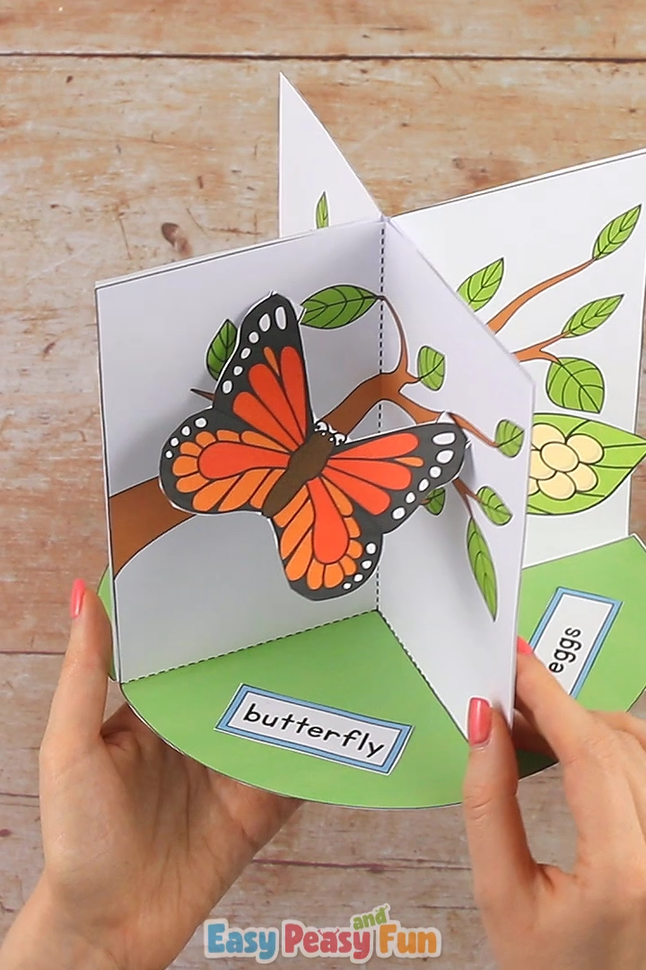 3D Butterfly Life Cycle Craft is part of Crafts, Butterfly life cycle craft, Preschool crafts, Life cycle craft, Origami crafts, Butterfly life cycle - Assemble our 3D Butterfly life cycle craft diorama and have your kids or students examine the life cycle of a butterfly in 3D!
