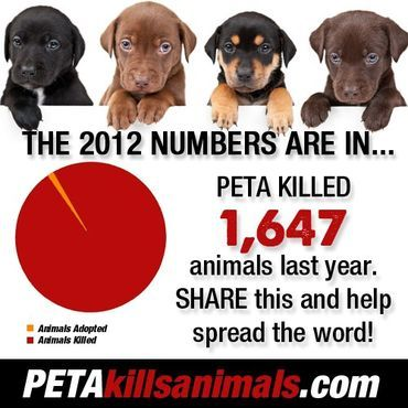 Image result for peta kills dog