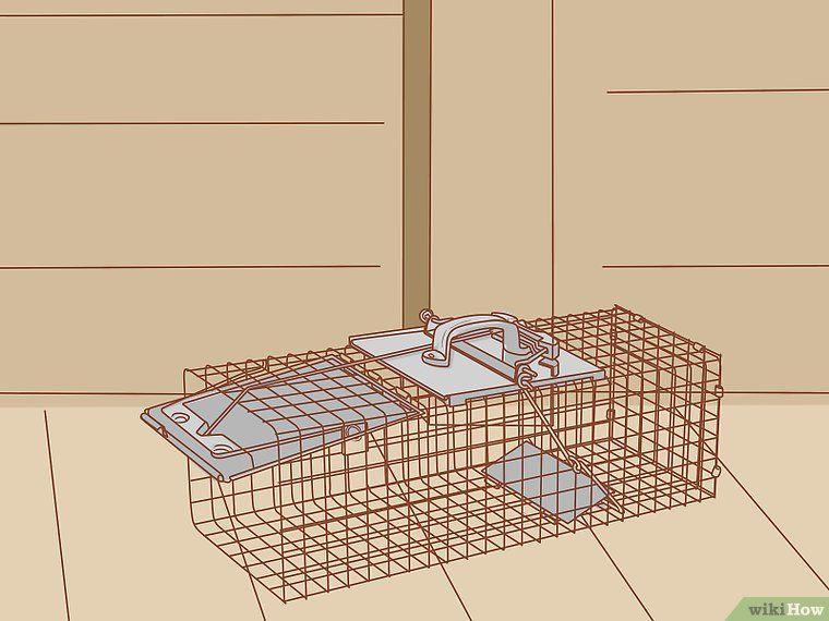 Get rid of squirrel s in the attic squirrel attic