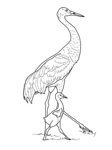 Sandhill Crane With Baby Coloring Page From Cranes Category