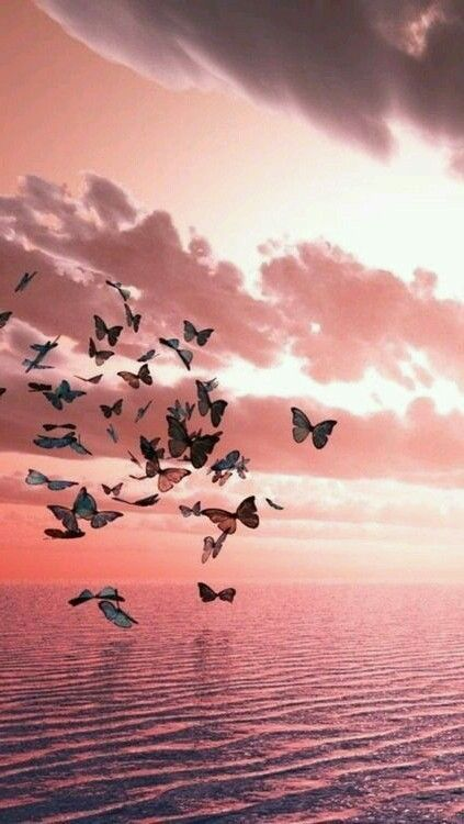 Pastel Pink Butterflies At Sunrise Wallpaper Wallpapers Girly