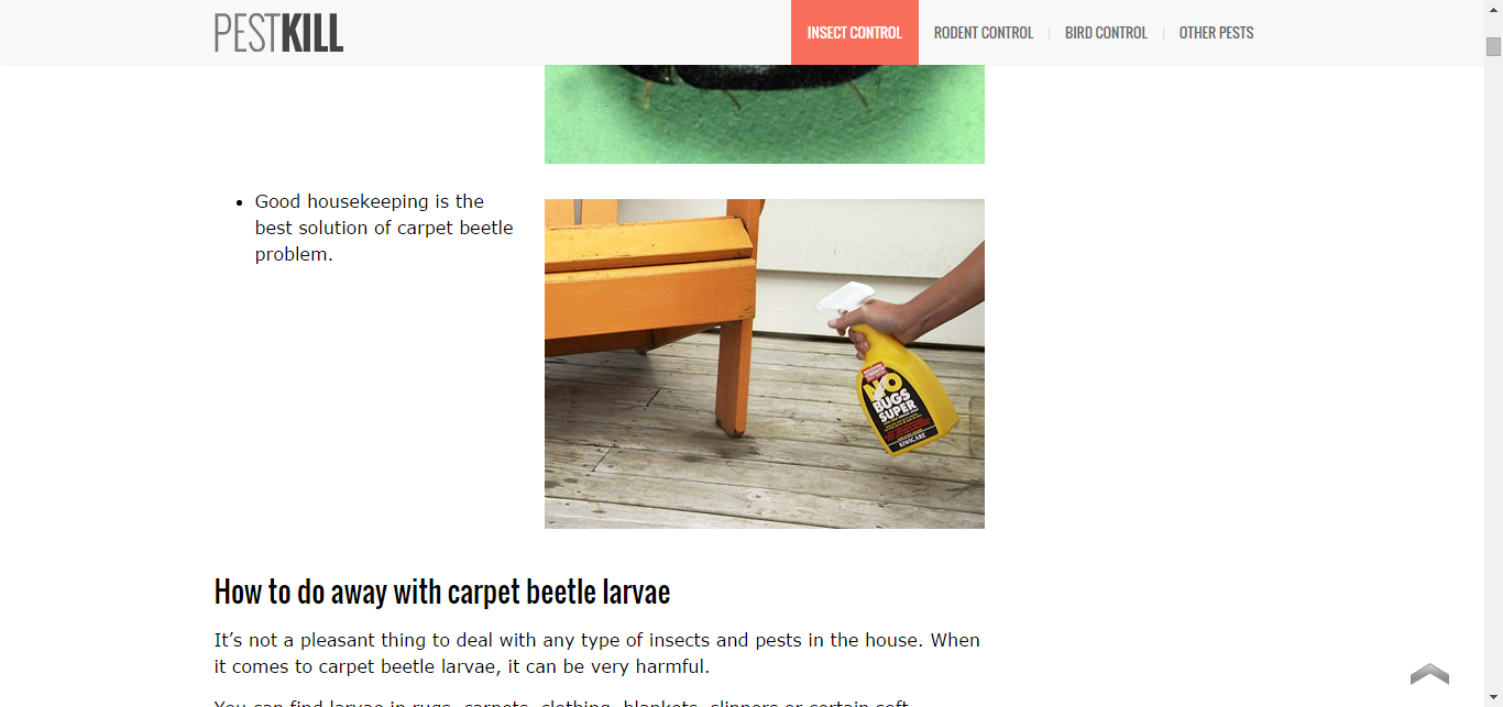 Best Control Tips on How to Get Rid of Carpet Bugs