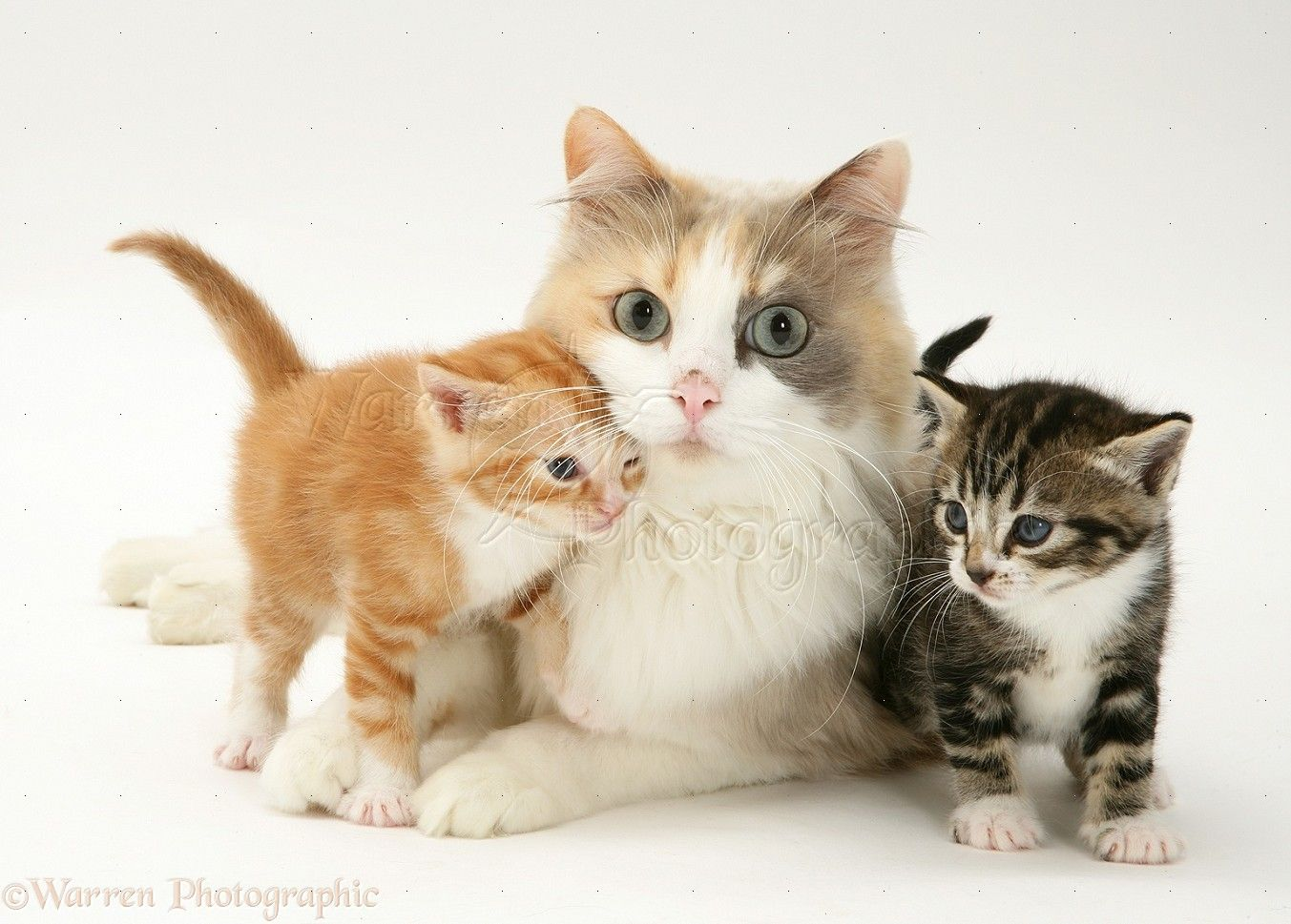 WP Mother cat and kittens Learn more about how to care for