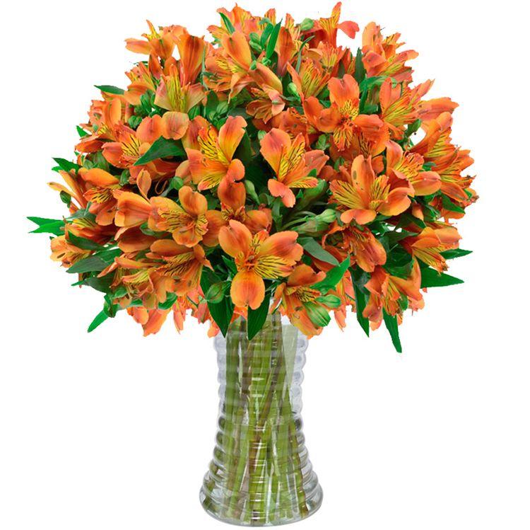 Preferência Astromélias Laranja - Flores Amarelas - Flores e Cores | Valentim  QM01