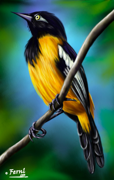 Turpial De Venezuela National Bird Beautiful Birds Wild Animal Kingdom Eagle Painting