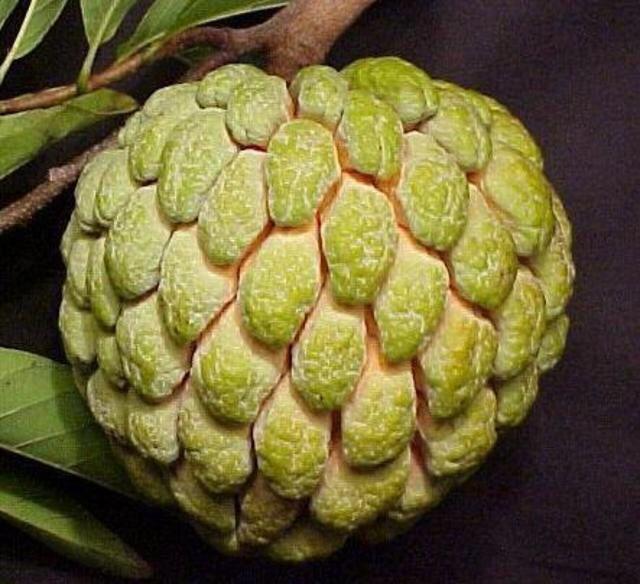 Jamaican Sweetsop Sugar Apple - From Tri...