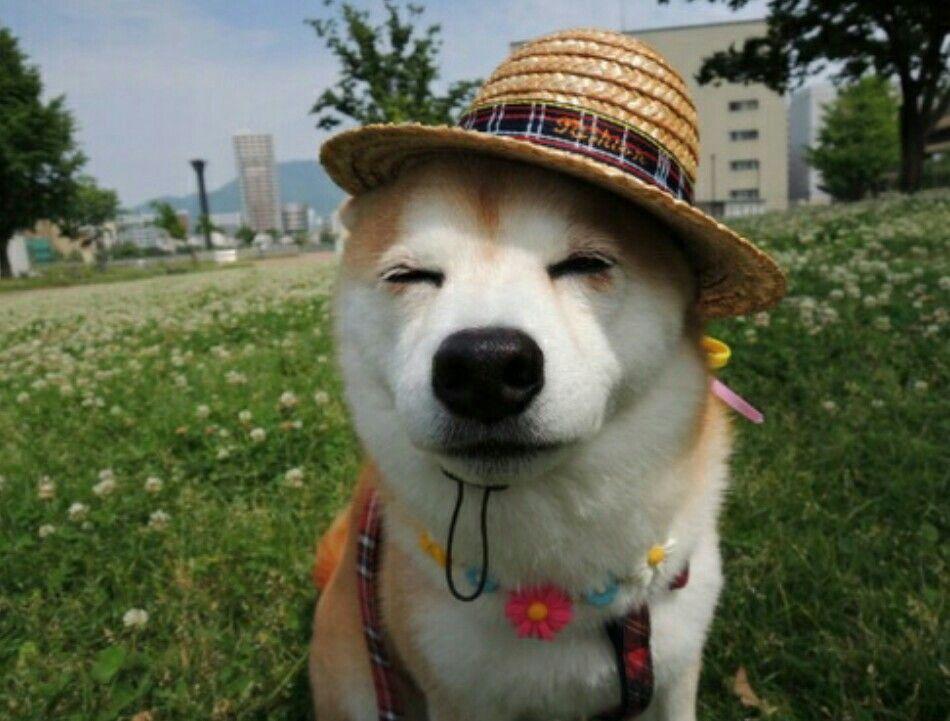 @virtualchic   Dogs, Animals, Cute creatures