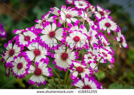 the beautiful flowers with pink petals, close-up