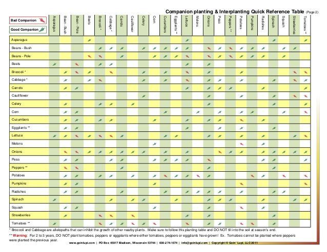 Companion Planting And Interplanting Quick Reference Table 640 x 480