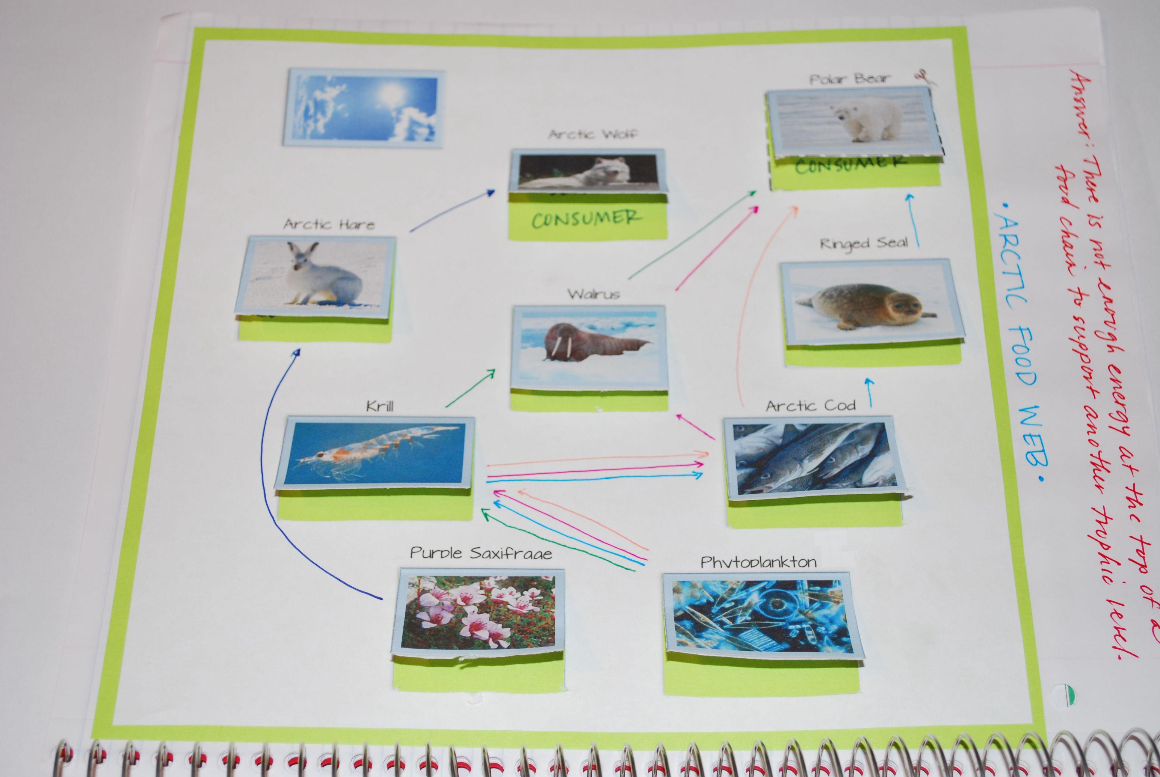 Ecology Review Worksheet 1 Answer Key - worksheet