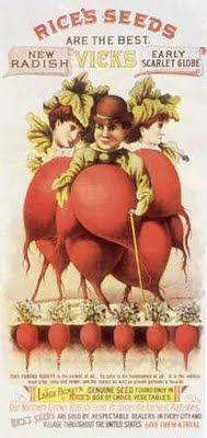 vintage seed packet: creepy radish men