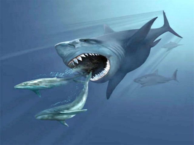 Megalodon Quiz Cool And Interesting Facts For Kids