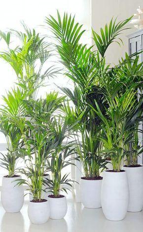 11 Zimmerpflanzen Fur Dunkle Ecken Pflanzen Zimmerpflanzen Palmenarten
