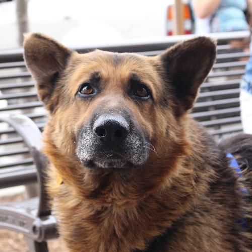 Adopt Slade On Petfinder Dog Adoption Animals Cute Animals