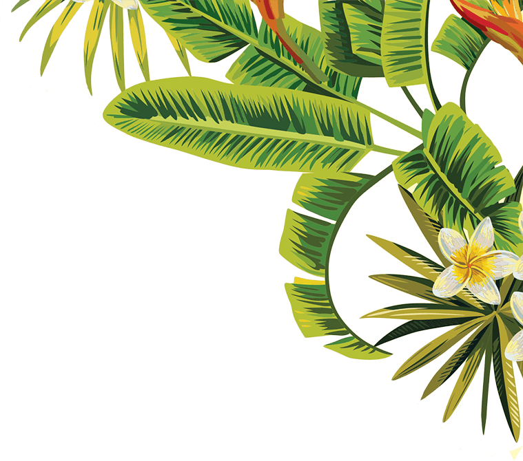 Image Result For Tropical Palm Leaves Png Plant Leaves Tree Leaves Wild Flowers