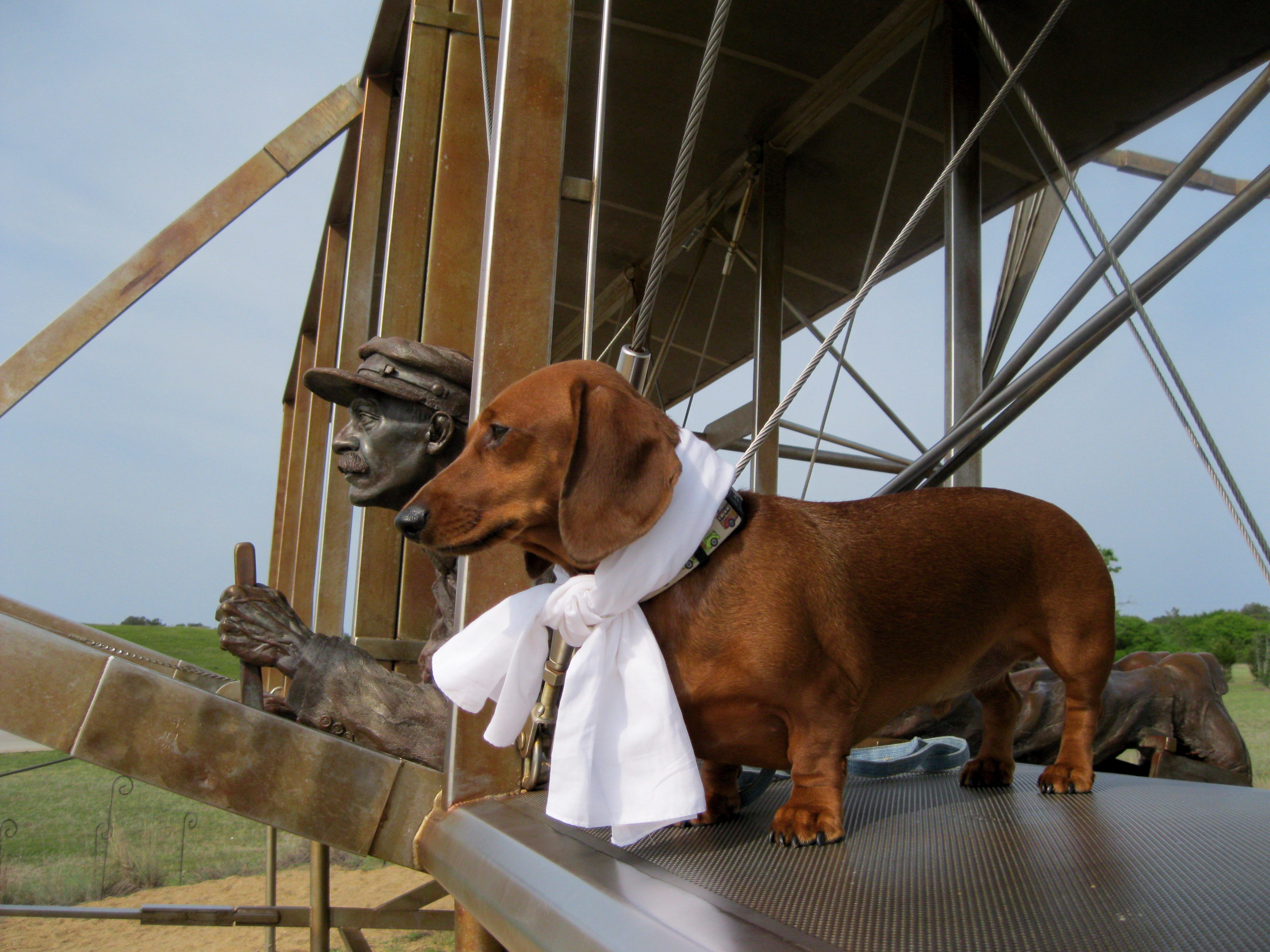 Pets Category My Mini Dachshund Chester At The Wright Bros