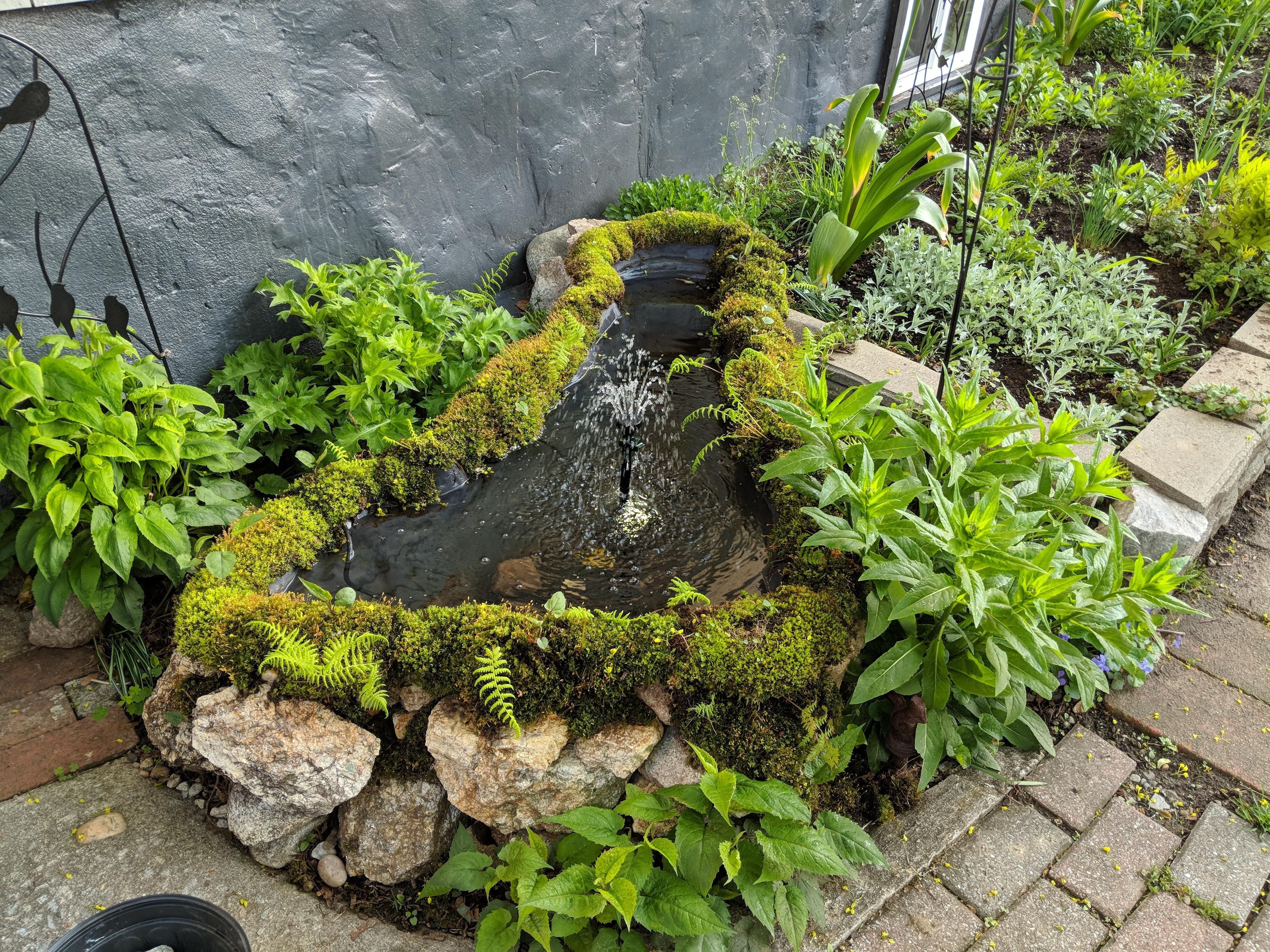 Small Pond For Our Wildlife Buddies #Gardening #Garden #Diy #Home