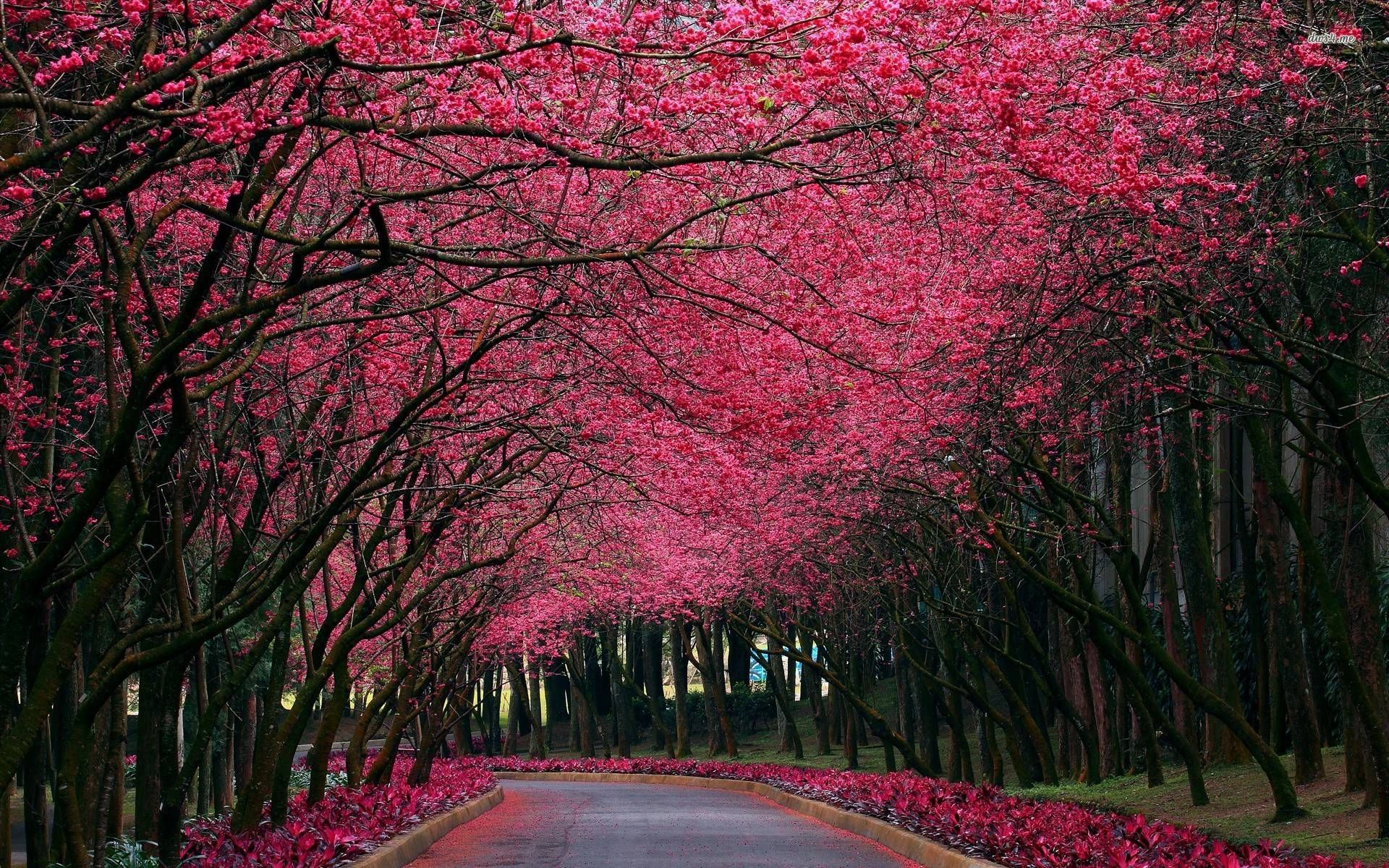 Pink Tree Wallpapers Wallpaper Cave With Images Scenery