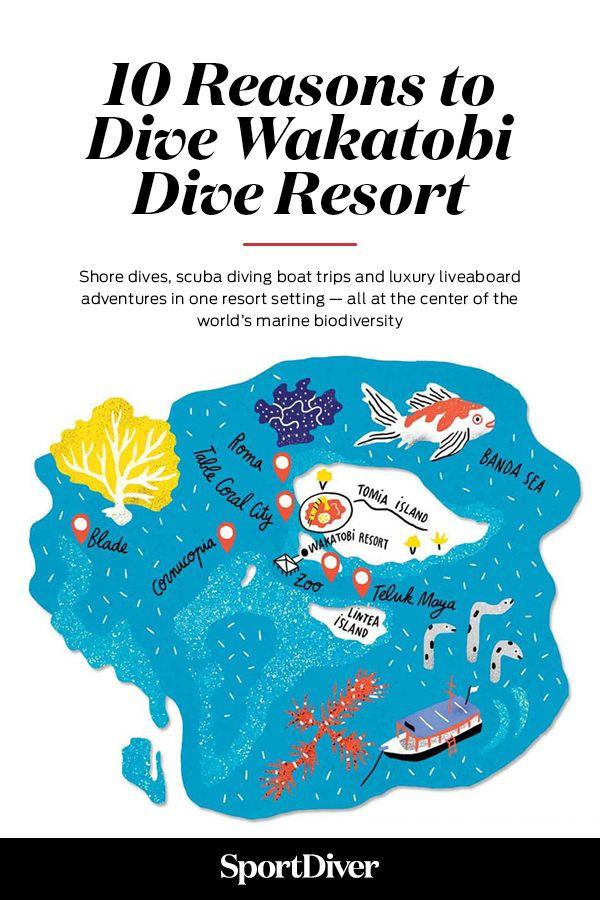 10 Reasons To Go Scuba Diving At Wakatobi Dive Resort In Indonesia Wakatobi Brings To The Table Shore Dives Best Scuba Diving Dive Resort Scuba Diving Courses