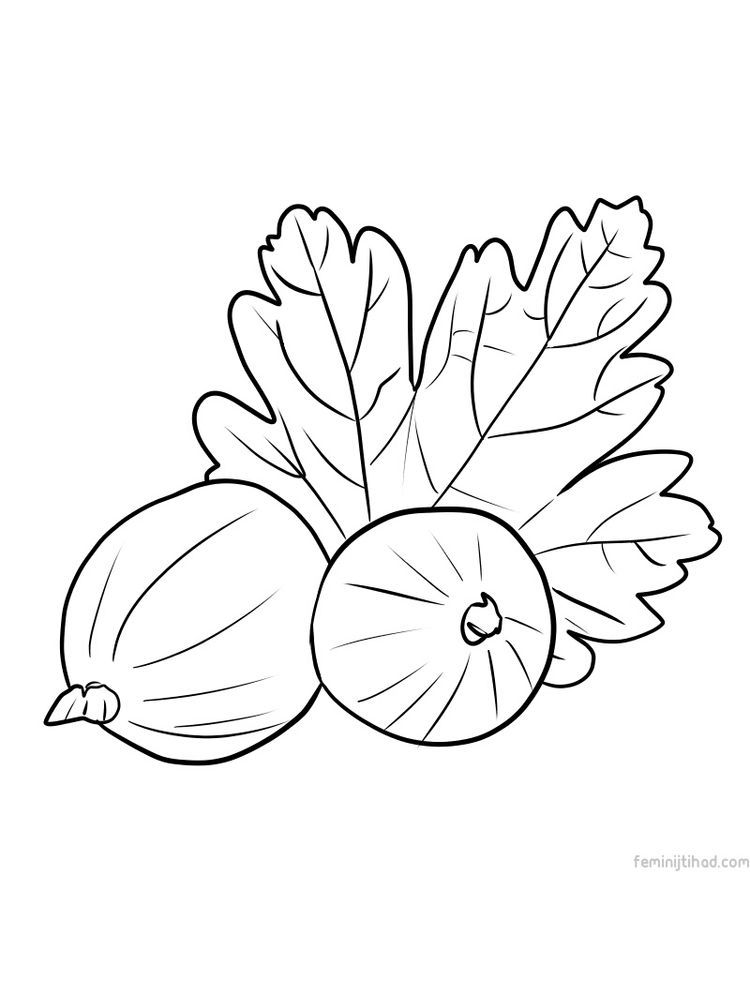 Gooseberry Coloring Image Free Coloring Pages Fruit Coloring Pages Coloring Pages To Print