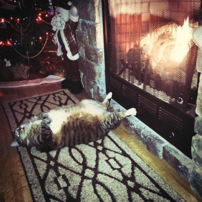 20 photos qui prouvent que les chats peuvent s'endormir partout