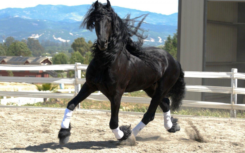 Black Horse Fullscreen Desktop Hd Wallpaper