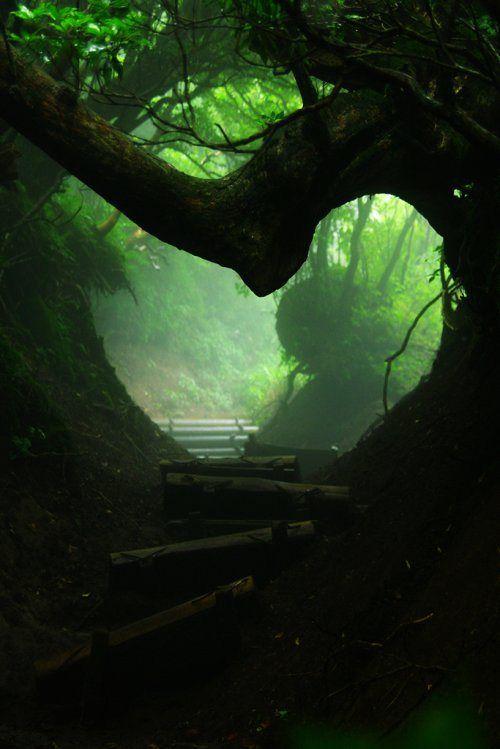 "Forest Portal ~ by Nadia ~ Japan ~ Miks' Pics ""Trees"" board @ http://www.pinterest.com/msmgish/trees/"