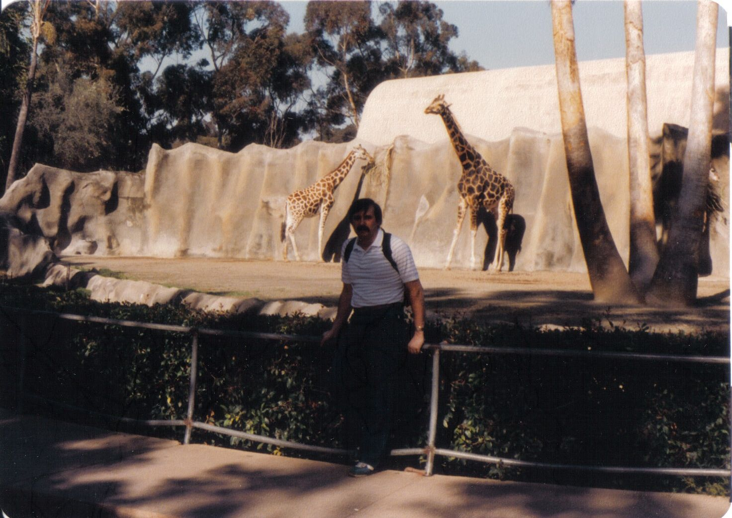 Giraffe enclosure, 1984