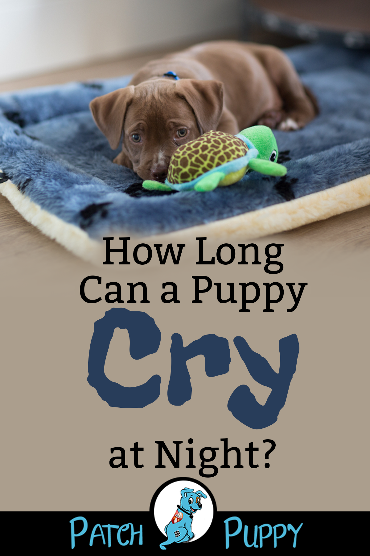 7 Simple Steps For Crate Training A Puppy The First Night Patchpuppy Com Crying Puppy At Night Puppy Training Schedule Crate Training Puppy