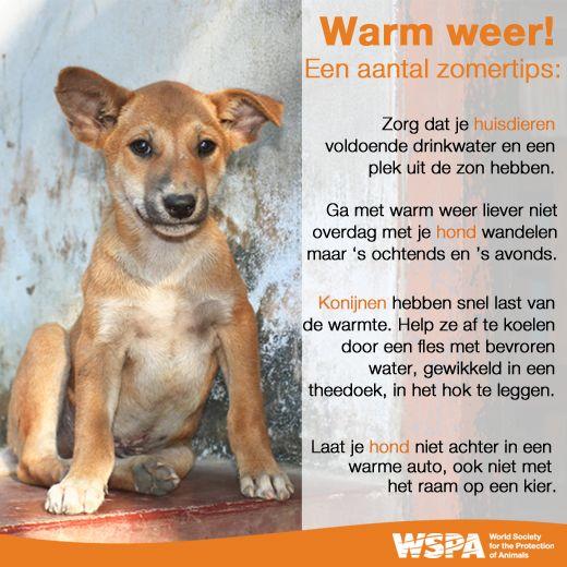 Met warm weer is het belangrijk om extra aandacht aan je huisdieren te besteden. We hebben daarom wat tips voor je op een rijtje gezet.