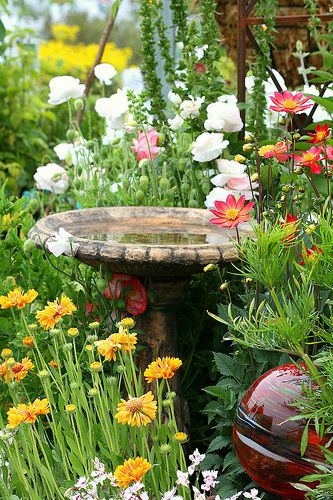 Love The Wildflower Afraid Fountain Would Breed More Mosquitos