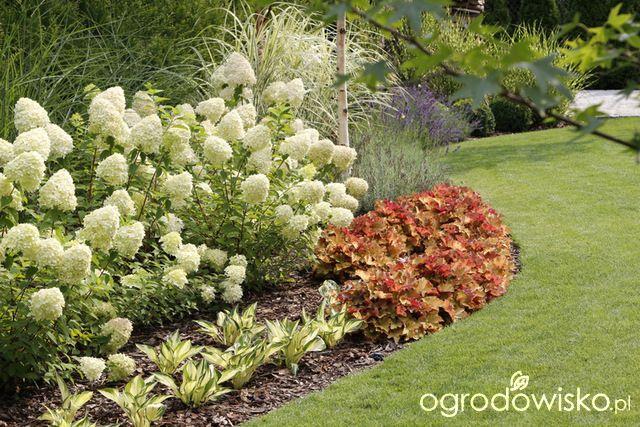 Zimozielony Ogrod Przy Bialym Domu Plants Backyard Landscaping Garden Design