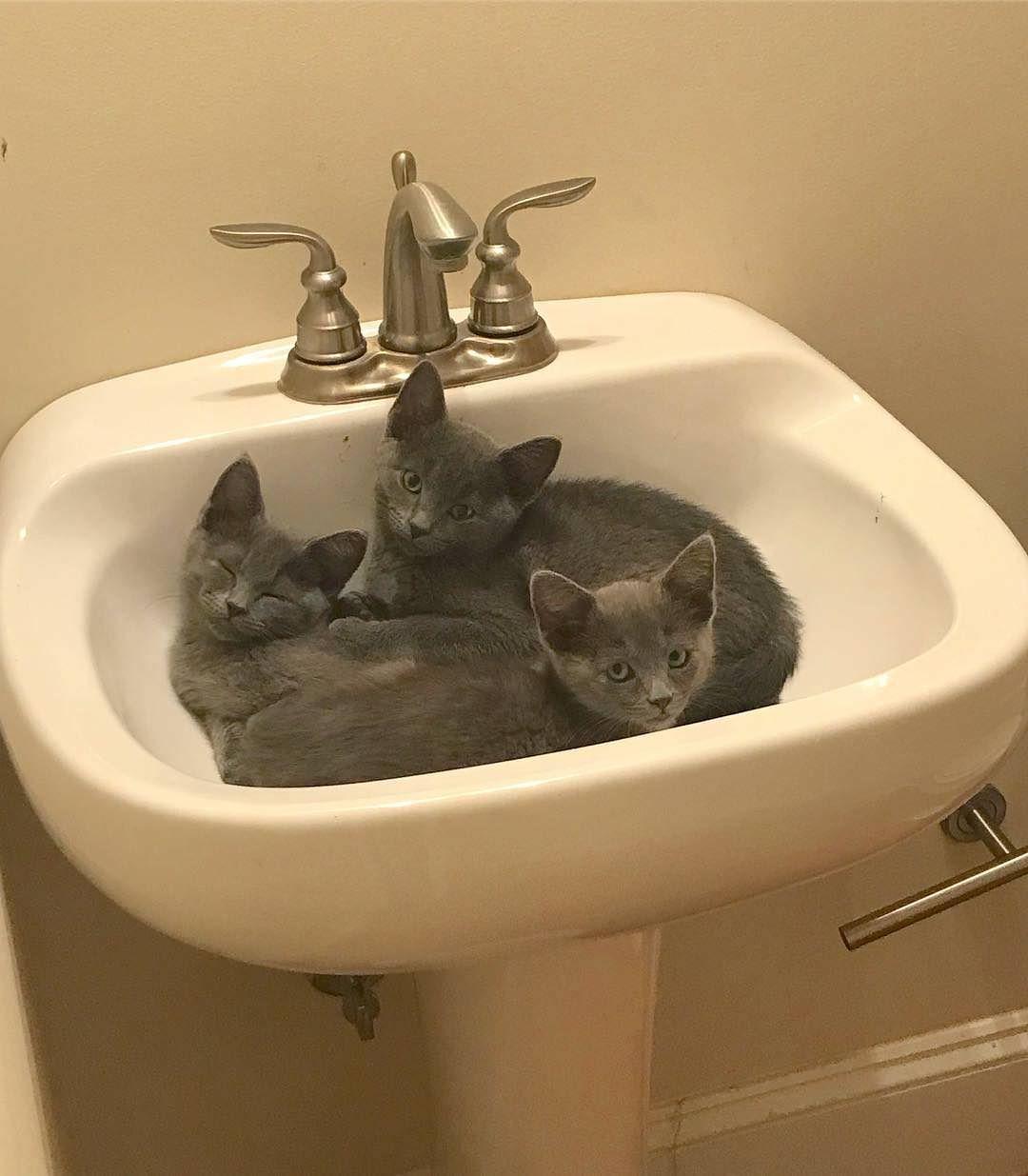 Why Does My Cat Sleep In The Bathroom 5 Reasons Cat Love Cat Sleeping Cat Training