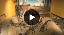Ever want to know what it's like to design museum displays for a living? Willard Whitson started out building model railroads....Now he time-travels and walks among the dinosaurs!