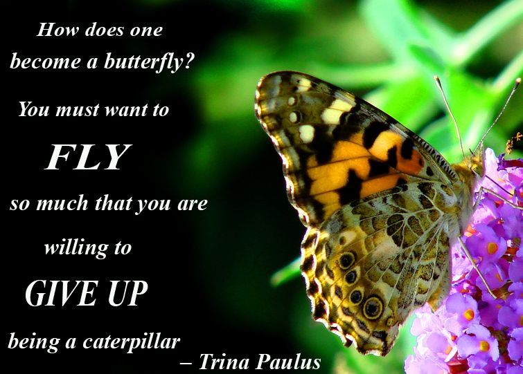Image result for terrific tuesday with flying butterfly