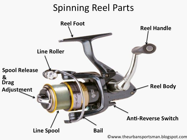 Fishing Pole And Reel Diagram - Wiring Diagram Center