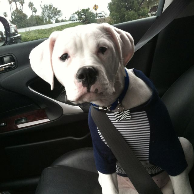 My baby bruiser on a ride with me