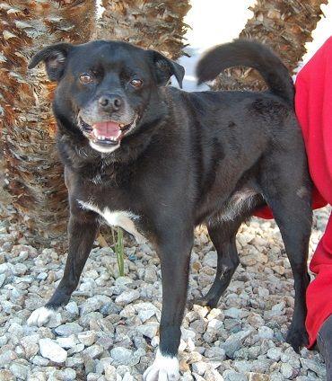 Rockefeller Dogs Dog Adoption Pug Beagle