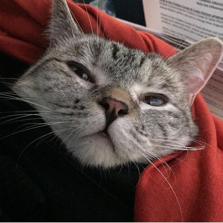 Nala_cat Crazy cats, Cats, Crazy cat lady