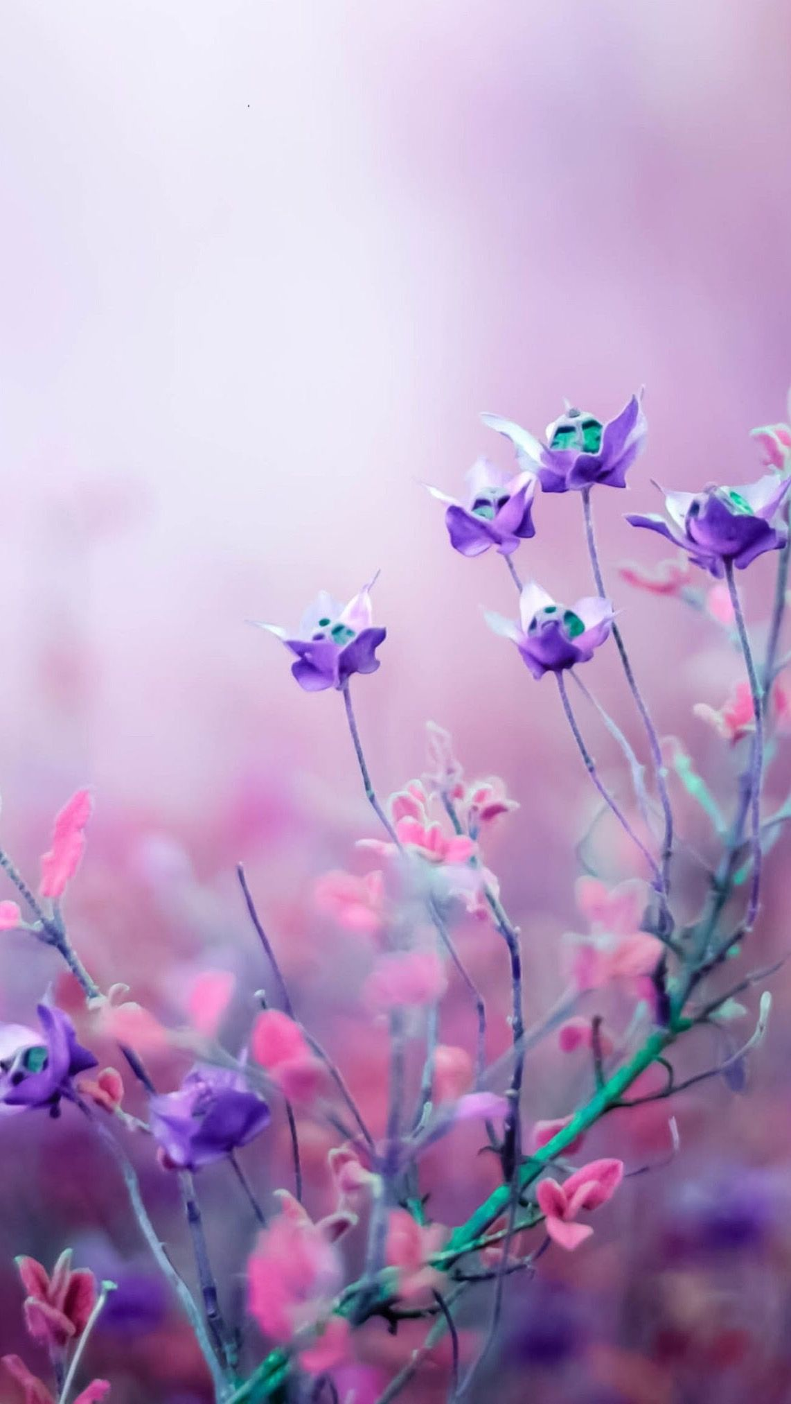 Hd Wallpaper Purple Flowers Wallpaper Free Flower Wallpaper Flower Wallpaper
