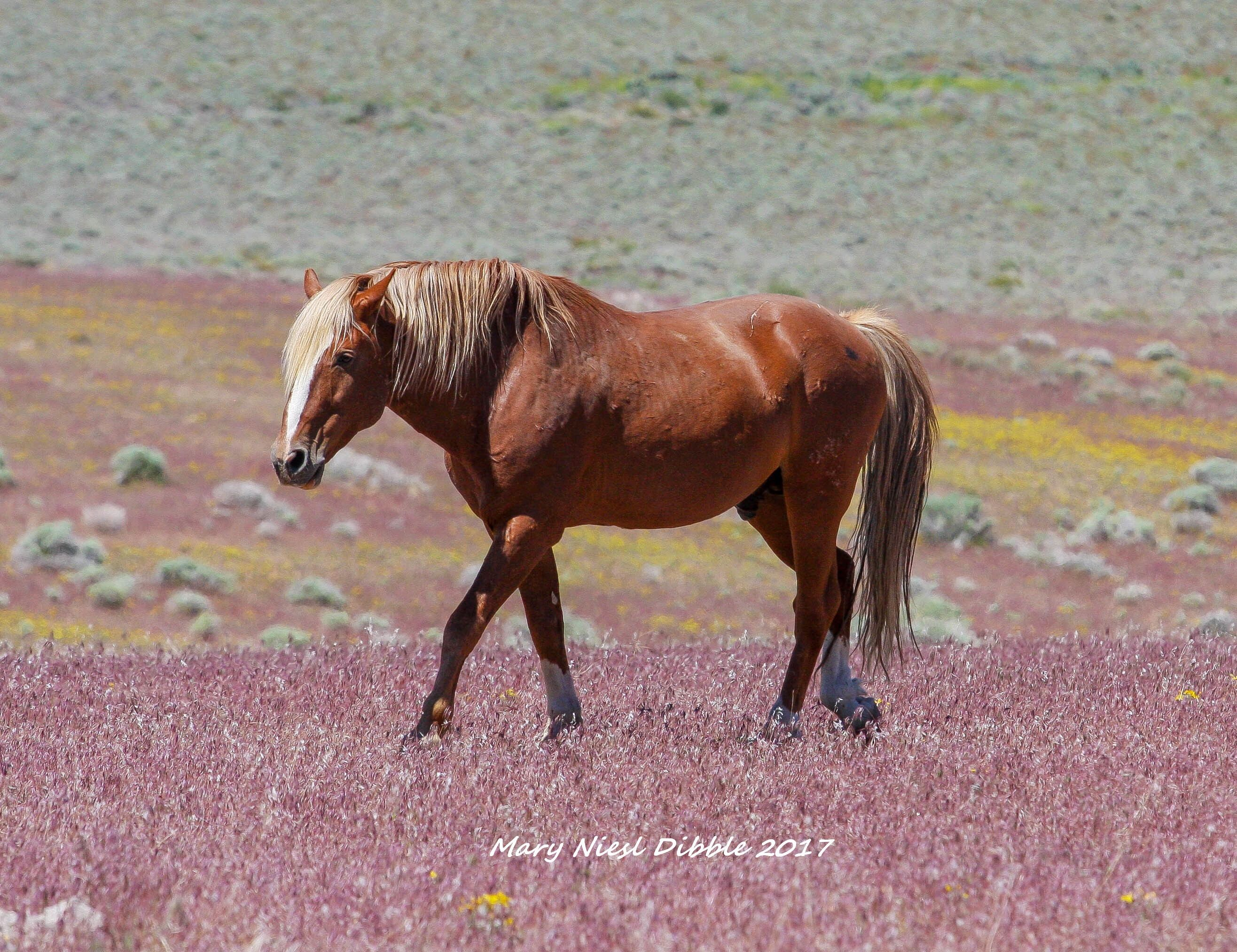 pin by mary dibble on wild horses pinterest horse