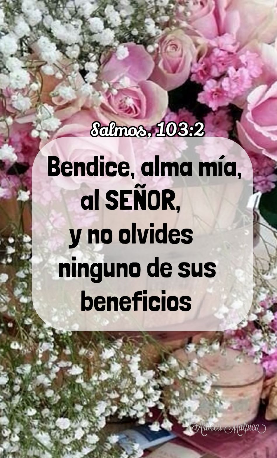Salmos 103 2 Bendice Alma Mía Al Señor Y No Olvides Ninguno De Sus Beneficios Salmos Frases De Salmos Alabanzas A Dios