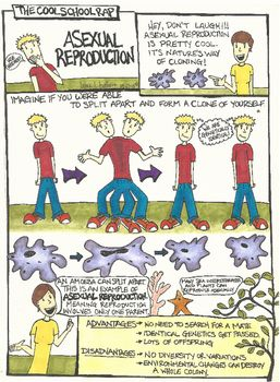Asexual Reproduction Comic | biology | Science classroom, Science