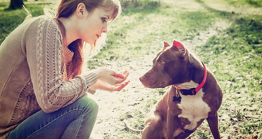 How To Care For Your Pit Bull What Kind Of Health Problem Do Pit