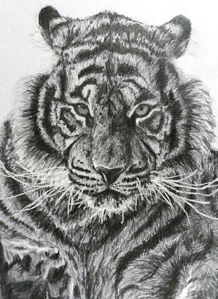 Dessin Realiste Tigre Noir Et Blanc Drawing Dessin Et Peinture