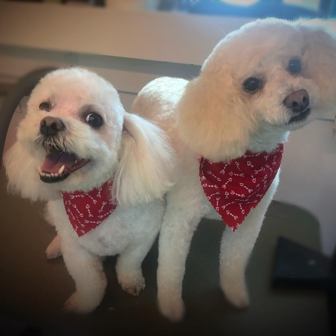Clyde And Lulu Mobilegrooming Dog Doggrooming Petgrooming