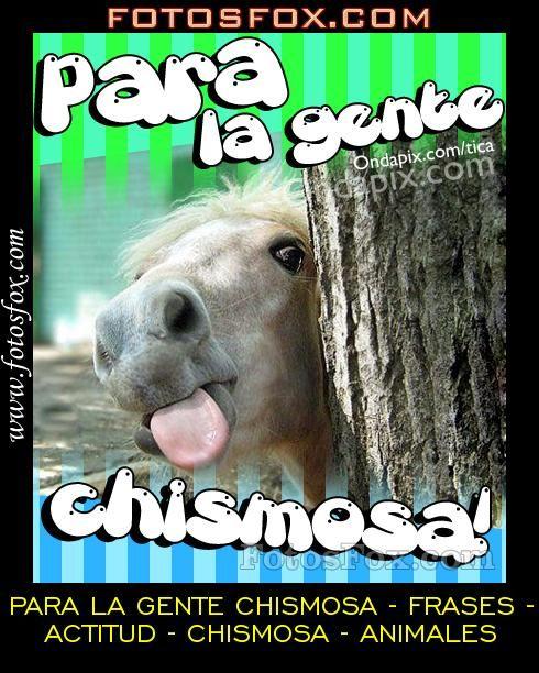 Animales Chismosa Actitud Frases Chismosa Gente La Para Animals Humor Photo