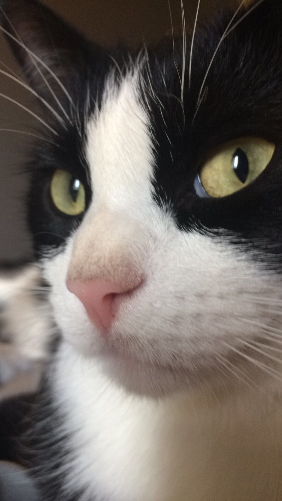 Handsome little cat face. Baby cats, Cute cats and